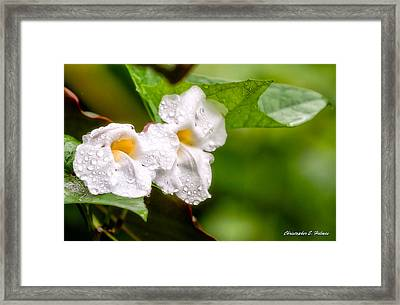 Rain Drenched Pair Framed Print by Christopher Holmes