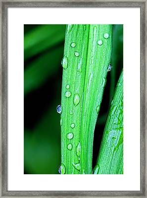 Rain Drops 26 Leaves Framed Print