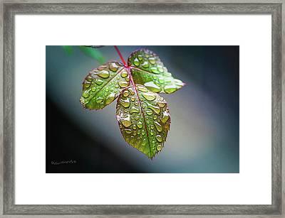 Rain Drops Framed Print