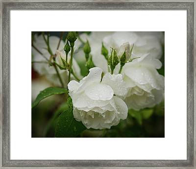 Rain Drops In Our Garden Framed Print by Miguel Winterpacht
