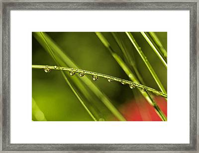 Rain Drops On Blade Of Grass Framed Print by Geraldine Scull