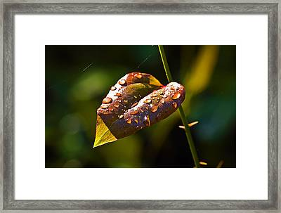 Rain Drops On Leaf Framed Print by Michael Whitaker