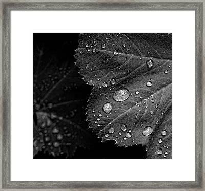 Rain Drops On Leaf Framed Print by Robert Ullmann