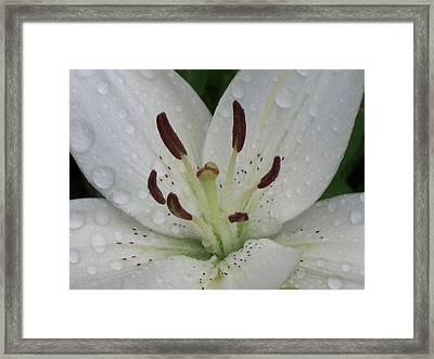 Rain Drops On Lily Framed Print