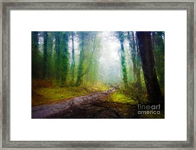 Rain Forest Framed Print by Carlos Caetano