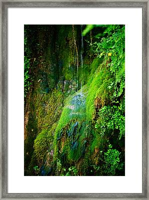 Rain Forest Framed Print by Louis Dallara