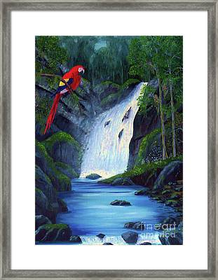 Rain Forest Macaws Framed Print