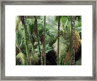 Rain Forest Palau Framed Print