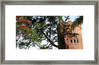 Rain Forest Puerto Rico Yokahu Observation Tower Flamboyant Tree Framed Print by Charlene Cox