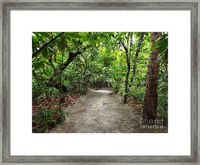 Rain Forest Road Framed Print