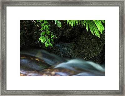Rain Forest Stream Framed Print