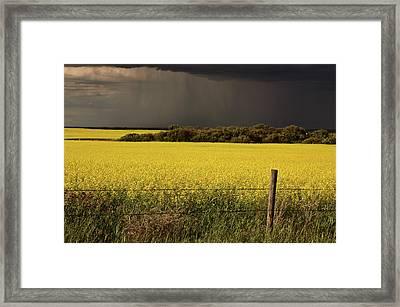 Rain Front Approaching Saskatchewan Canola Crop Framed Print by Mark Duffy