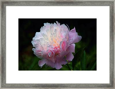 Framed Print featuring the photograph Rain-kissed Peony by Byron Varvarigos