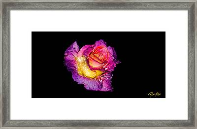 Rain-melted Rose Framed Print by Rikk Flohr