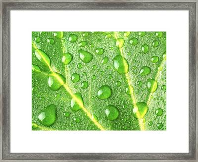 Rain On A Leaf Framed Print by Jim Hughes