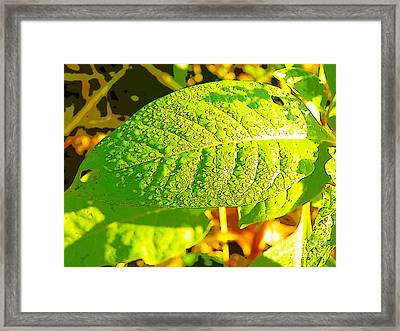 Rain On Leaf Framed Print