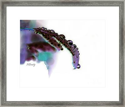 Rain On Rose Leaf Abstract Framed Print