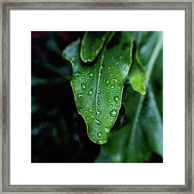 Rain On The Philodendron Framed Print