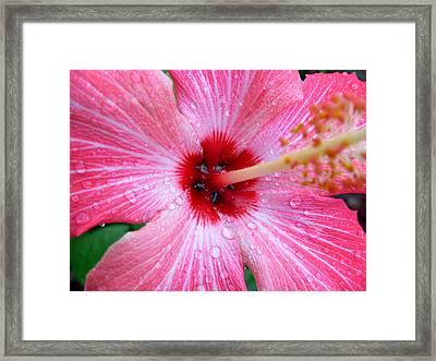 Rain Petals Framed Print