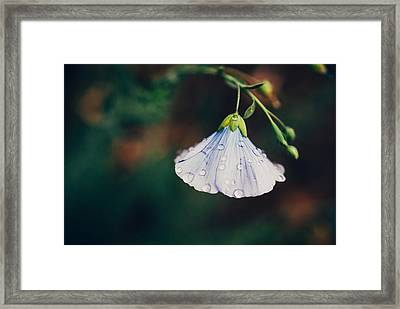 Rain Tickled Framed Print