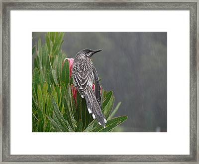 Rainbird Framed Print by Evelyn Tambour