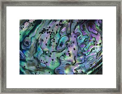 Rainbow Abalone Haliotis Iris Framed Print by Lynda Harper