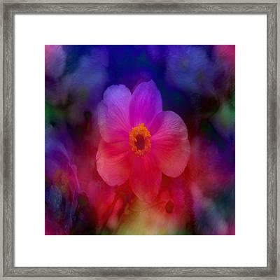 Rainbow Anemone Framed Print by Lena Photo Art