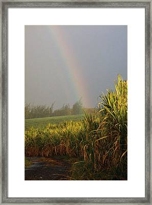 Rainbow Arching Into Field Behind Stream Framed Print by Stockbyte