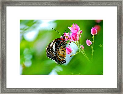 Framed Print featuring the photograph Rainbow Butterfly by Peggy Franz