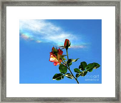 Rainbow Cloud And Sunlit Roses Framed Print