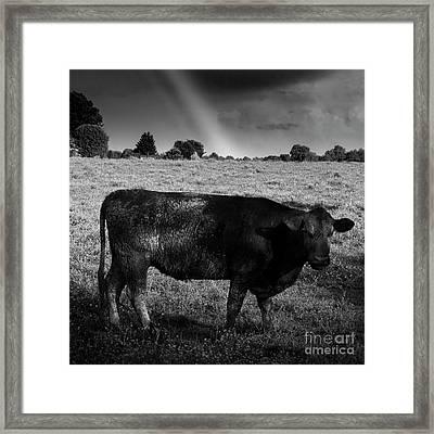 Rainbow Cow Framed Print