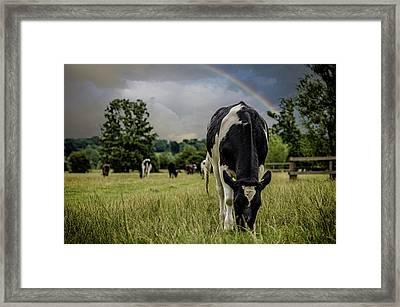 Rainbow Cow Framed Print by Martin Newman