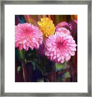 Rainbow Dahlias Framed Print