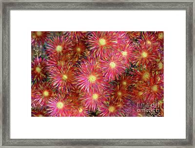 Rainbow Daisies By Kaye Menner Framed Print