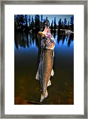 Rainbow Days Framed Print