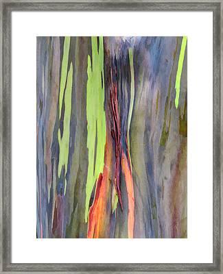 Rainbow Eucalyptus 13 Framed Print