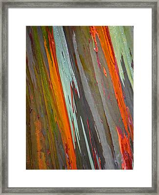 Rainbow Eucalyptus Tree Framed Print