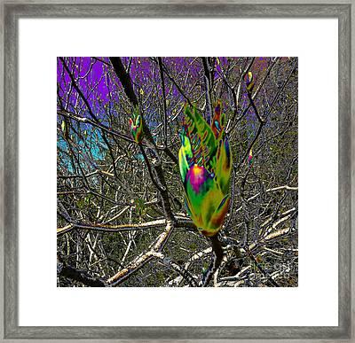 Rainbow Explosion Framed Print by JoAnn SkyWatcher