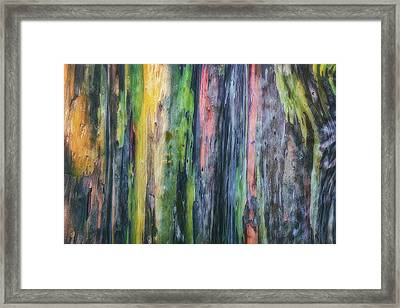 Framed Print featuring the photograph Rainbow Forest by Ryan Manuel