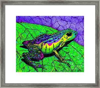 Rainbow Frog 2 Framed Print by Nick Gustafson