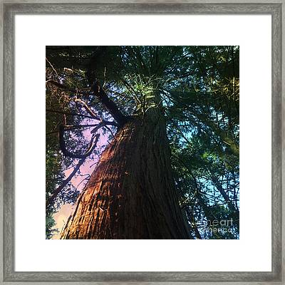 Rainbow Hue Heaven Framed Print by Kim Prowse