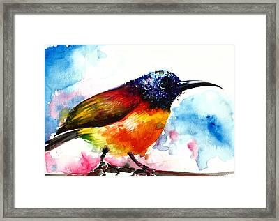 Rainbow Hummingbird Watercolor Framed Print
