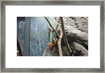 Rainbow Iguana   Framed Print by Tim Michael Ufferman