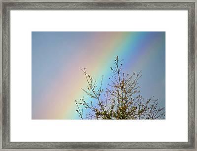 Rainbow Framed Print by Laurie Hasan