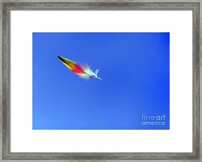 Rainbow Lorikeet Feather Framed Print by Bill  Robinson