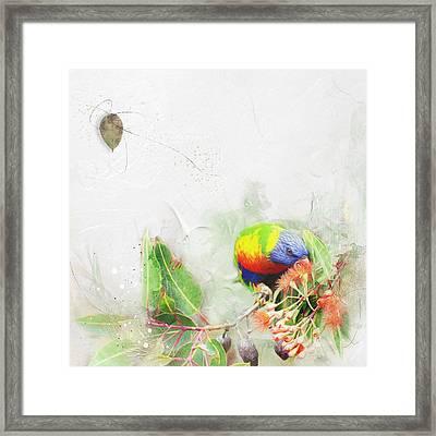 Rainbow Lorikeet Framed Print by Margaret Goodwin