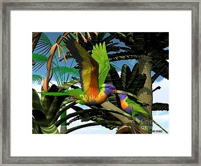 Rainbow Lorikeet Parrots Framed Print by Corey Ford
