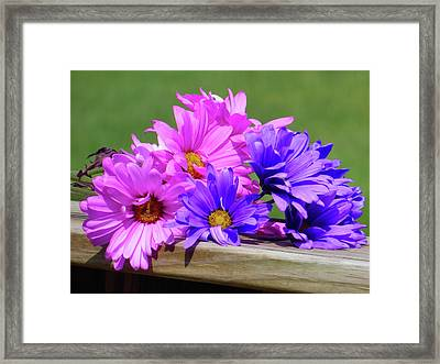 Rainbow Mums 2 Of 5 Framed Print by Tina M Wenger