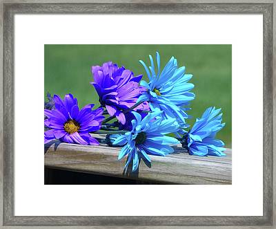 Rainbow Mums 3 Of 5 Framed Print by Tina M Wenger