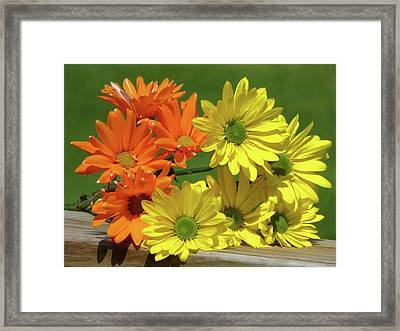 Rainbow Mums 4 Of 5 Framed Print by Tina M Wenger